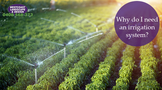 Why Do I Need an Irrigation System?